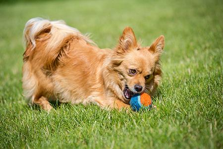dog playing Wishbone Pet Boarding